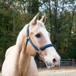tumblr ng4wnk2S1C1ruo04eo3 1280 150x150 Horseback Riding Demo Day
