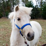 tumblr ng4wnk2S1C1ruo04eo4 r2 1280 150x150 Horseback Riding Demo Day