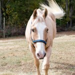tumblr ng4wnk2S1C1ruo04eo5 r1 1280 150x150 Horseback Riding Demo Day