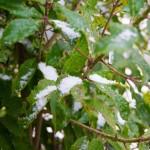 tumblr nkfz9nVctx1ruo04eo4 1280 150x150 Georgia Snow