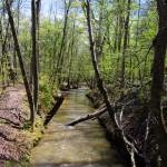 DSC 0999 150x150 Sweetwater Creek 2 Weeks in a ROW!
