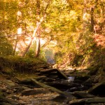DSC 0170 150x150 Sope Creek in the Fall