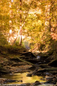 DSC 0170 200x300 Sope Creek in the Fall