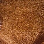 CSu0ULmWsAAC5Z3 150x150 Corn Maze!