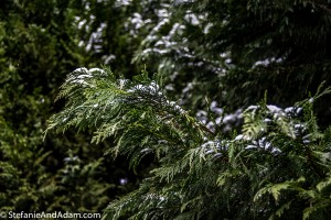 DSC 0367 300x200 Southern Snow Day!