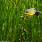 Bird Watching - Hilton Head