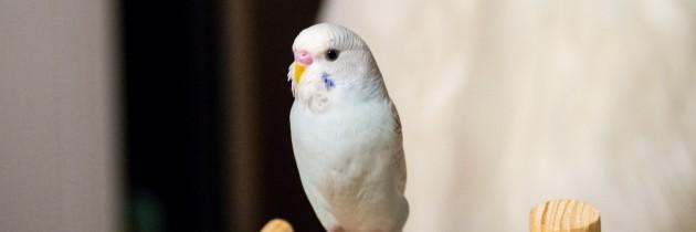 Meet Prince Charming!